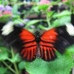 Butterfly Effect Definition