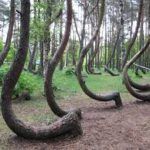Hoia Baciu Forest Stories